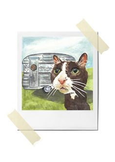 The look on this cat's face is adorable!  ...Camping is High Style - 5x7 PRINT. Starting at $1 on Tophatter.com!