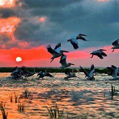 Danube Delta in Romania Turkey Europe, Danube Delta, Romania Travel, I Believe In Love, Bosnia And Herzegovina, Montenegro, Folklore, Mother Nature, Croatia