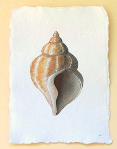Original watercolour illustration painting sea shell whelk  beach ocean coastal collection. £30.00, via Etsy.
