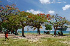 Martinique, Pointe Marin et ses Flamboyants ...
