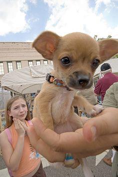 Mini chichi dans la main et la jeune en arrière qui le trouve siiiiiii mignon :P