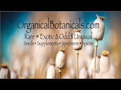 http://OrganicalBotanicals.com - Papaver Somniferum Poppies and Seeds @organicbotanics