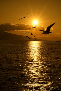 Seagulls-Sunset (By Emre Kaya)