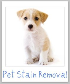 Pet stain removal guide for clothing, upholstery and carpet {on Stain Removal 101}