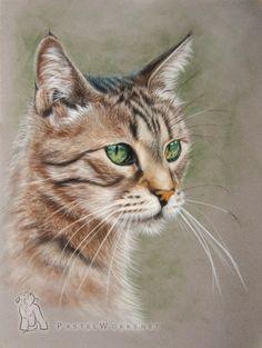 Cat - Pastel drawing