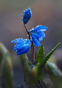 Este posibil ca imaginea să conţină: 1 persoană, floare şi natură Water Flowers, Fresh Flowers, Purple Flowers, Spring Flowers, Beautiful Flowers, My Flower, Flower Art, Flower Garden Plans, Colorful Plants