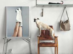 Arthouse Dog
