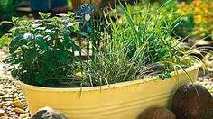 Výsledek obrázku pro netřesky v nádobách Plants, Plant, Planets