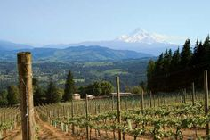 Cathedral Ridge Winery sits high atop a ridge overlooking the Columbia Gorge, with Mount Hood and Mount Adams gleaming in the distance. Dundee Oregon, Oregon Wine Country, Wine Press, Wine Tourism, Vacation Memories, Willamette Valley, Columbia River Gorge, Wine And Spirits