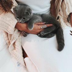 "koodiiz: "" @too7i___ 's kitten loves me  now I want one  #scottishfold """