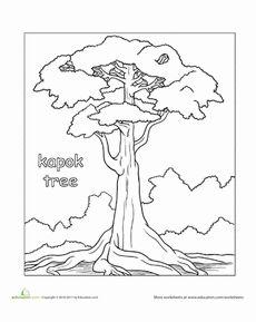 Color the Kapok Tree Worksheet
