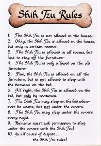 Shih Tzu: 11 x 14 Ready-to-Frame Dog Breed Rules #1230