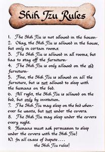Shih Tzu: 11 x 14 Ready-to-Frame Dog Breed Rules #1230