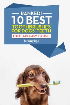 """Best Dog Toothbrush: HUGE Review of 10 Toothbrushes for Dogs (2016). If you've never brushed dog's teeth before, you may think it's fairly simple. Not so. Even if you're using the best dog toothbrush, """"simple"""" probably won't be the word you'll use to describe the experience. It is very rare that a dog will let his owner brush his teeth without putting up a fight, but a good toothbrush for dogs will definitely make the task easier. #dogs #doggrooming #pets"""