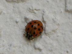 ♥ ladybugs