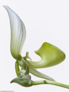 The Fine Art of Blooming Flowers by Paul Lange ~ Cool Stuff Directory