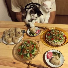 笑到噴飯!兩隻貓咪天天看人類吃飯的反應