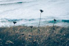 grass coast - Nature