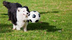 Come giocare a calcio con il vostro cane