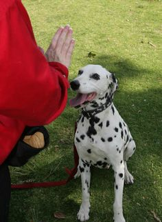 Dog Training 101 - young and adult dogs can learn the basics