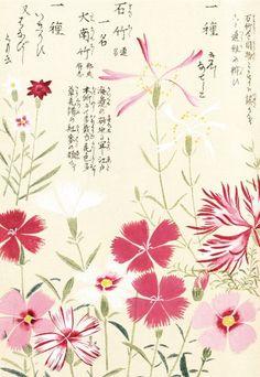 """Pinks, by Kan'en Iwasaki, also called """"Honzo Zufu."""""""