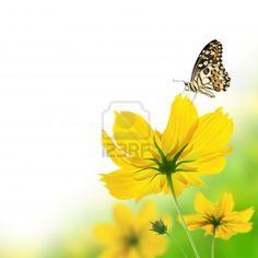 Mooie gele bloemen en vlinder Stockfoto