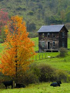 Abandoned Farm House, like the ones near Lizzie in the novel Shabby Chic Forever