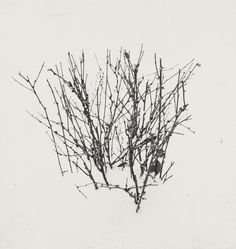 """Harry Callahan. Weed Study. 1948. Gelatin silver print. 2 5/16 x 2 3/16"""" (5.8 x 5.5 cm). Gift of the photographer. 1180.2009. © 2016 The Estate of Harry Callahan. Photography"""