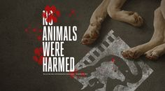 Animals Were Harmed: Hollywood's Nightmare of Death, Injury, and Secrecy Exposed Reasons To Be Vegan, Animal Rights, Fun To Be One, Hollywood, Death, Animal Welfare, Articles, Entertainment, Change