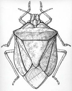 The Stink Bug. Nothing eats it, and even if you spray it only dies if you spray right on it. They are a mess!