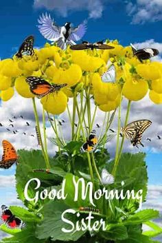 Looking for Good Morning Wishes for Sister? Start your day by sending these beautiful Images, Pictures, Quotes, Messages and Greetings to your Sis with Love. Positive Good Morning Quotes, Good Afternoon Quotes, Good Morning Texts, Good Morning Gif, Good Morning Picture, Good Morning Greetings, Good Morning Wishes, Morning Board, Morning Coffee