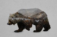 The Kodiak Brown Bear Art Print