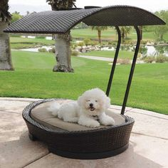 Stylish Wicker Dog or Cat Bed With Removable Sun Shade  #pet