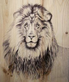 https://blogimal.net/drawing-upon-nature-for-wildlife-masterpieces/
