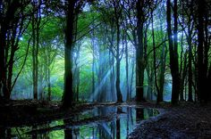 Séta az erdőben – 2 perces személyiségteszt! MOST KIDERÜL VALÓJÁBAN MILYEN A KAPCSOLATOD ÖNMAGADDAL ÉS A KÖZVETLEN KÖRNYEZETEDDEL - POZITÍV GONDOLATOK