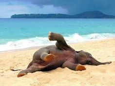 Baby elephant playing on the beach for the first time <3