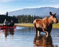 𝕎𝕖 𝕔𝕒𝕟 𝕟𝕖𝕧𝕖𝕣 𝕙𝕒𝕧𝕖 𝕖𝕟𝕠𝕦𝕘𝕙 𝕠𝕗 𝕟𝕒𝕥𝕦𝕣𝕖. www.waidlife.com #waidlife #passion #lifestyle #jagd #waidmannsheil #hunting #jakt #jager #jagerin #hunter #huntress #hunt #outdoor #wirsinddraussen #backtonature #wald #filson #forest #bushcraft #bushcraftgear #landscape #travel #hiking #wanderlust #naturelovers #adventure #herbst #natur #draussenzuhause Bushcraft Gear, Lifestyle Shop, Back To Nature, Hunting, Wanderlust, Passion, Outdoor, Adventure, Landscape