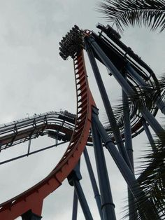Sheikra - one of my favs. Busch Gardens Tampa Bay, Travel Memories, Places Ive Been, Fair Grounds, Florida, Roller Coasters, Park, Spaces, Travel Souvenirs