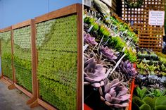 Succulent store with cool living wall!