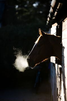 """""""Se olhares nos olhos de um cavalo, verás muito da tristeza do mundo."""" (Guimarães Rosa)"""