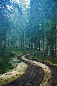 roads + trees + forests
