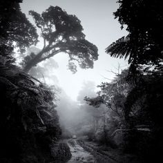 Shooting in fog makes for an adventurous--and somewhat dreamlike--photo.