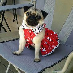 Do you like my spring dress?