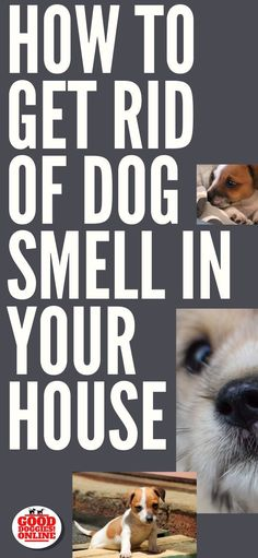 We all love our dogs, but sometimes they can make our homes smell a little funky. Whether it's dog pee smell or just wet dog, check out these cleaning tips on how to get rid of dog smell in your house. #dogs #dogcare #cleaningtips