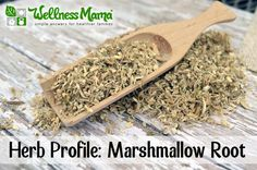 Herb Profile: Marshmallow Root: For digestive problemslike heartburn, stomach illness or occasional digestive troubles. I usually mix with peppermint leaf or ginger to make a soothing tea.