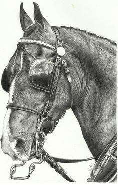 Coach Horse by Pyrcias on DeviantArt. For more great pins go to Horse Pencil Drawing, Horse Drawings, Animal Drawings, Art Drawings, Pencil Drawings, Graphite Art, Graphite Drawings, Hackney Horse, Horse Artwork