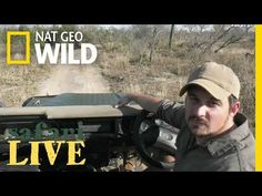 (223) WATCH NOW: Safari Live | National Geographic - YouTube