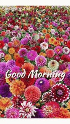 66 Super ideas for flowers garden pink flora Good Morning Images Flowers, Good Morning Beautiful Quotes, Good Morning Images Hd, Good Morning Gif, Good Morning Picture, Morning Pictures, Morning Pics, Night Flowers, Morning Coffee