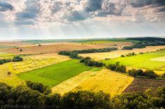 rapeseed (canola) fields, so pretty