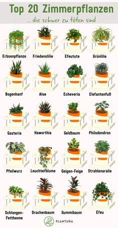 Pflegeleichte Zimmerpflanzen: Unsere Top 10 - Plantura , Top 20 houseplants that are hard to kill: These sturdy houseplants are hard to kill. Even without a green thumb, these houseplants survive with you! Cactus House Plants, House Plants Decor, Plant Decor, Garden Plants, Cactus Cactus, Cactus Decor, Easy Care Houseplants, Easy Care Indoor Plants, Indoor Cactus